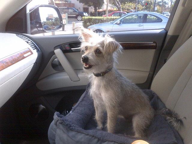 Zoe Saldana's dog Mugsy
